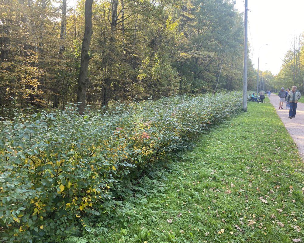 Посади миллион деревьев