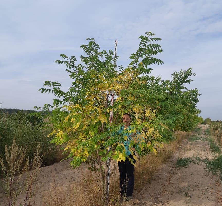 Распродажа хвойных и лиственных деревьев и кустарников