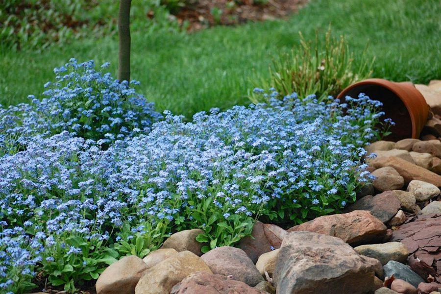 Голубой цвет в оформлении сада